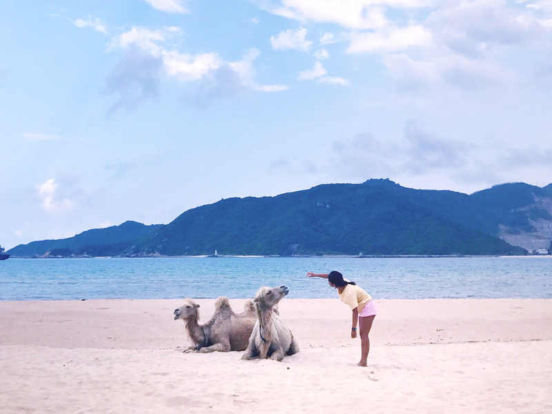 三亚:后海生活 | 和海边的动物做朋友.