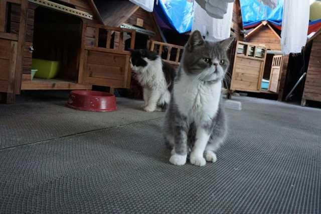 壁纸 动物 狗 狗狗 猫 猫咪 小猫 桌面 640_426