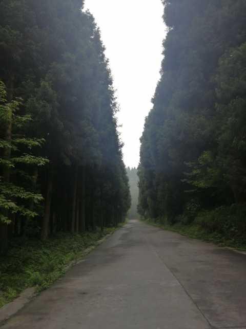 咸丰坪坝营森林树上宾馆点评