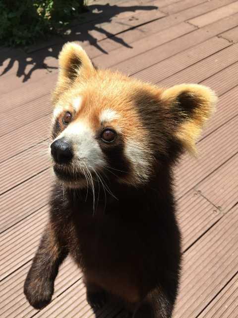 普洱开元·小熊猫庄园(原小熊猫庄园别墅型度假酒店)点评
