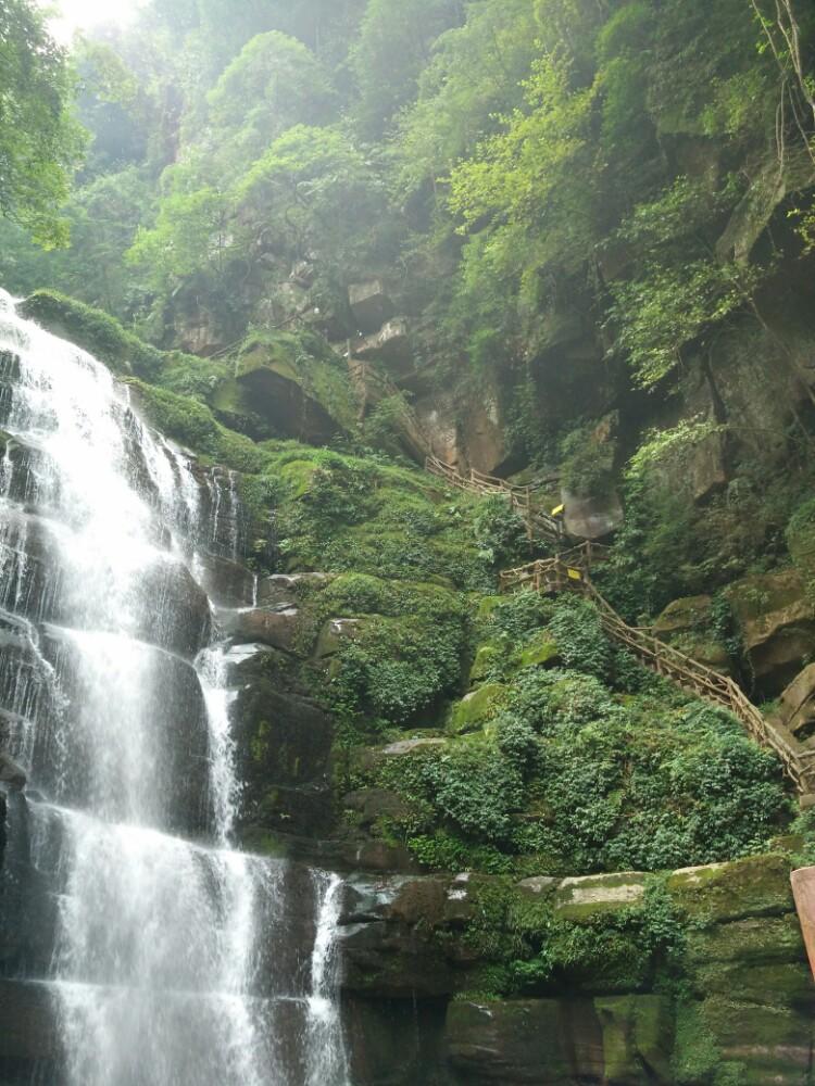 四川雅安2日1晚跟团游·碧峰峡 上里古镇 动物园二日游