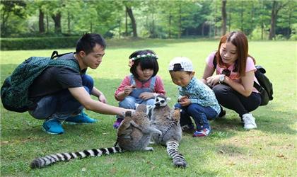 上海2日1晚自由行(4钻)·上海野生动物园门票 宿1晚莎