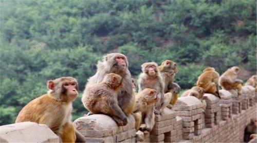 河南辉县2日1晚跟团游·【含春节】五龙山野生动物园