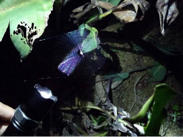 大自然最美丽的飞行动物之一——蝴蝶