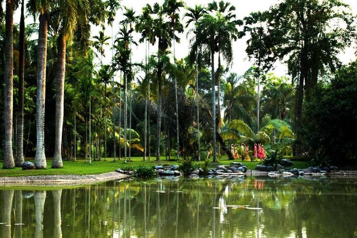 在野象谷,你可以穿越热带雨林寻找亚洲象的踪迹.图片