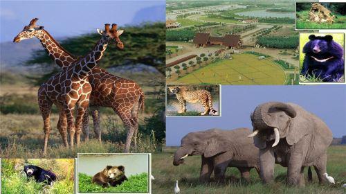 度假区3日2晚跟团游·【含春节初一,初二】迪士尼小镇 野生动物园