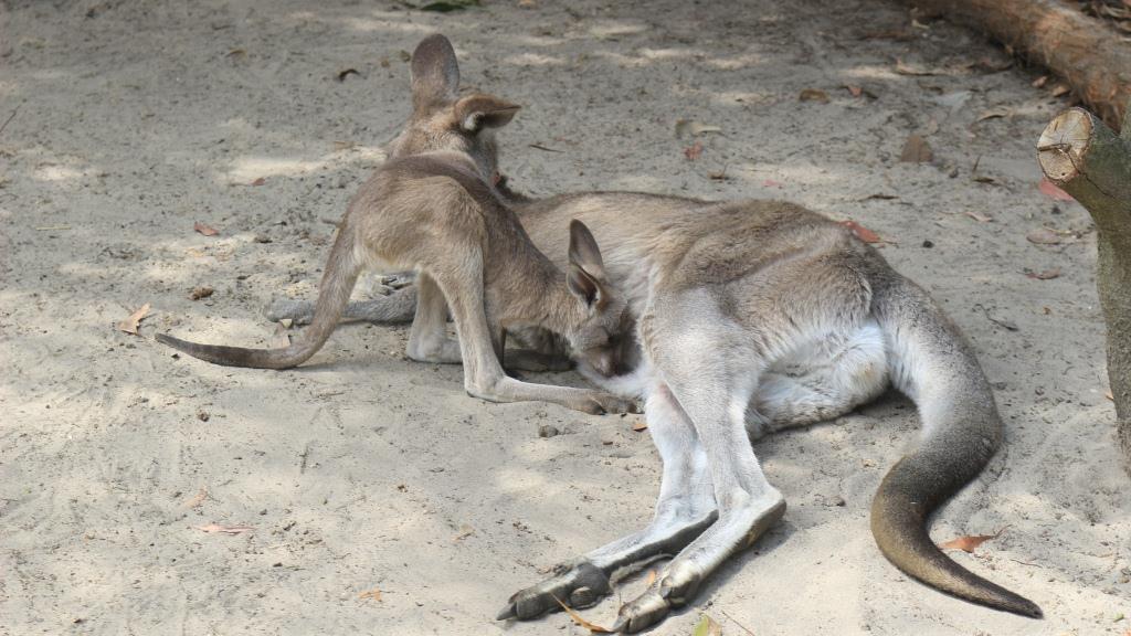 幼年爬行类动物都需要在保护区里