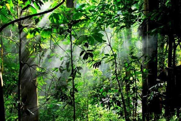 野象谷原始森林公园 中科院西双版纳热带植物园6日5晚