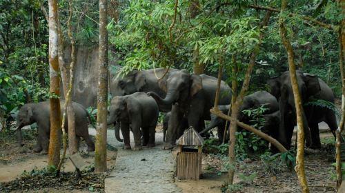 云南西双版纳+野象谷+原始森林公园3日2晚跟团游·一