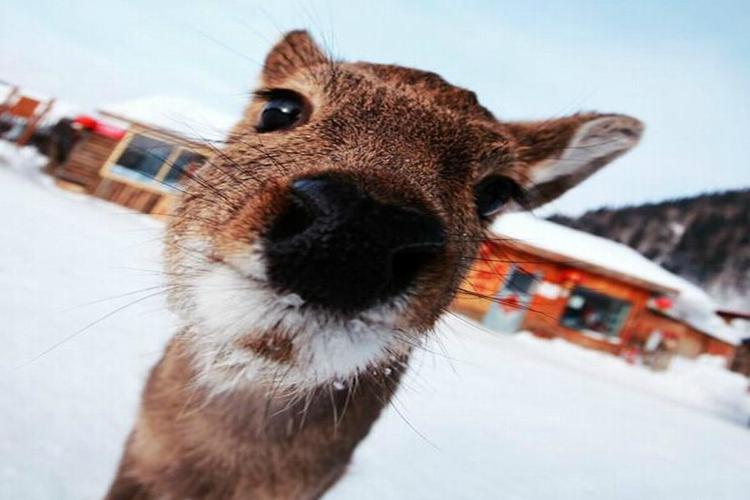 雪乡3日2晚跟团游·东北二人转+秃顶子山雪地