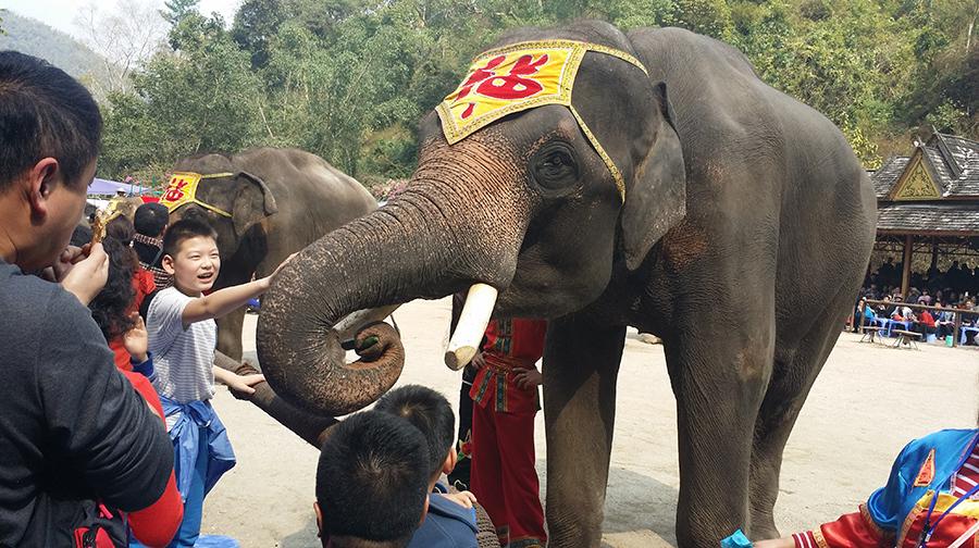 西双版纳 热带雨林王国动植物科考6日亲子游学·我和大象有个约会