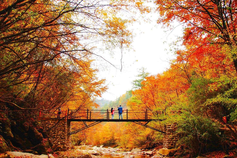陕西汉中2日1晚跟团游·汉中黎坪国家森林公园-诸葛古镇