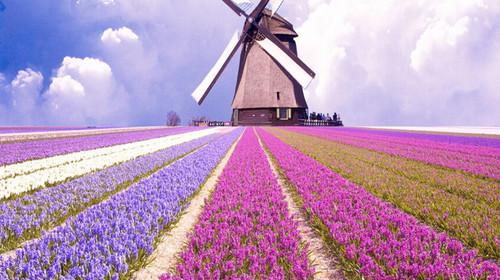 上海支持商务[荷兰送签]旅游签证/探亲访友签电爱教程图片