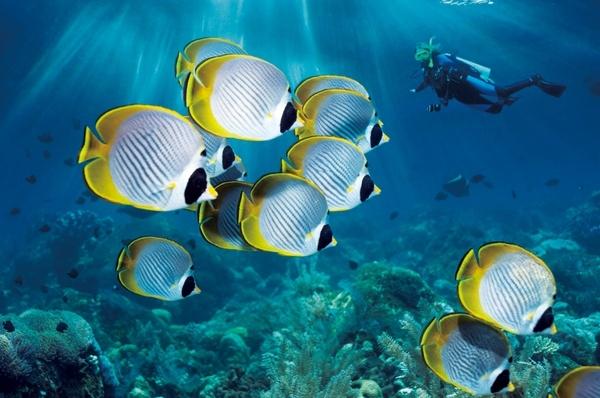 壁纸 海底 海底世界 海洋馆 水族馆 桌面 600_398