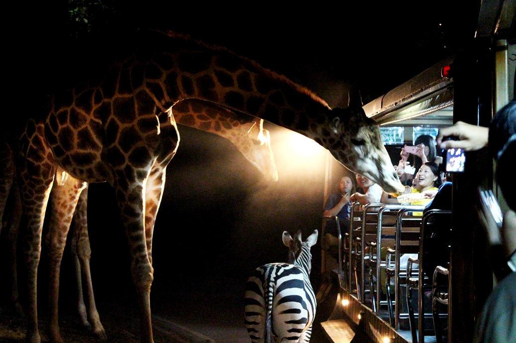 去新加坡夜间野生动物园需要提早订门票吗