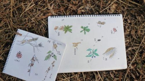 初识大自然,笔记大自然,植物世界,拍案惊奇!