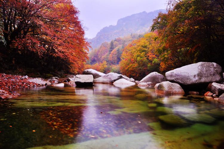 光雾山红叶有面积大,色彩多,周期长等几大特点,800多平方公里的景区有图片