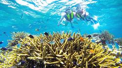 海底世界潜水