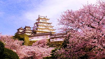 姬路城的美丽樱花