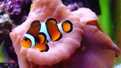 缤纷海底世界