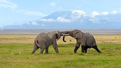 观雪山、访大象