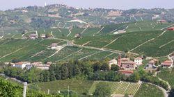 皮埃蒙特葡萄酒区