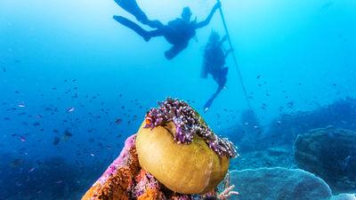 图蓝奔潜水