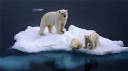 奇遇北极熊