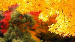 北海道枫红美景
