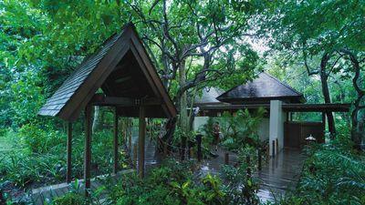 Rainforest Bure