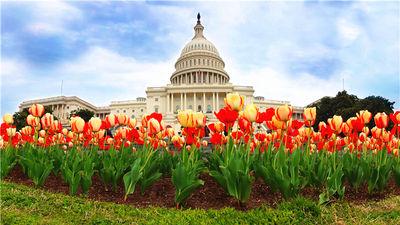 春光明媚的华盛顿