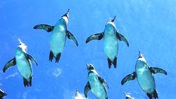 圆顶水槽窥探企鹅泳姿
