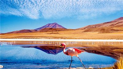 地貌传奇 阿塔卡玛沙漠