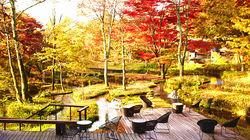 轻井泽水边红叶