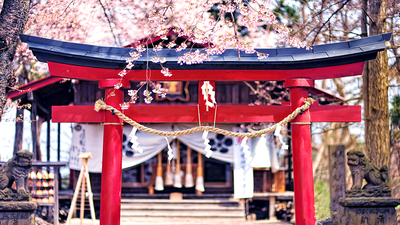 樱花季的京都