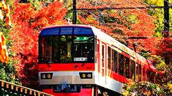 红叶隧道观光小火车