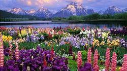 鲜花覆盖的蒂蒂湖畔