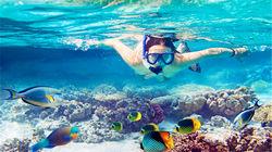 在纯净的海洋探寻水下奥秘