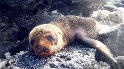 39号码头悠闲晒太阳的小海狮