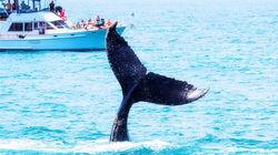 纽波特出海观鲸