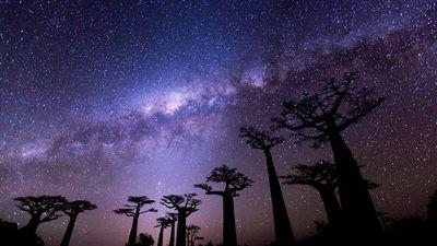 猴面包树大道拍摄星轨