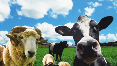 牧场可爱的牛羊