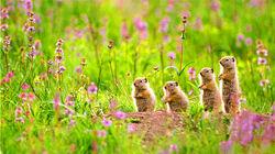 黄石国家公园野生动物