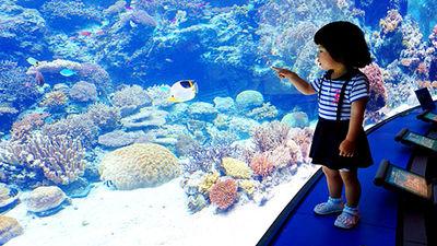 探秘海洋生物