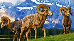 走进国家公园,与野生动物亲密接触