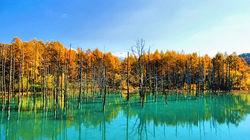秋天的青池