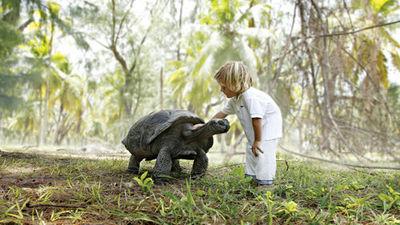 baby象龟