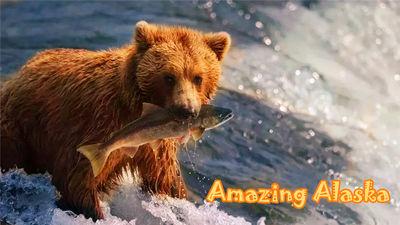 阿拉斯加观熊