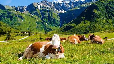 瑞士大自然