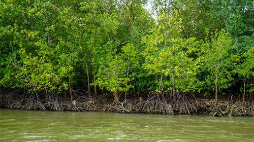 济南甲米兰塔岛+红树林皮划艇柏木一日游【趣泰国香围棋海钓图片